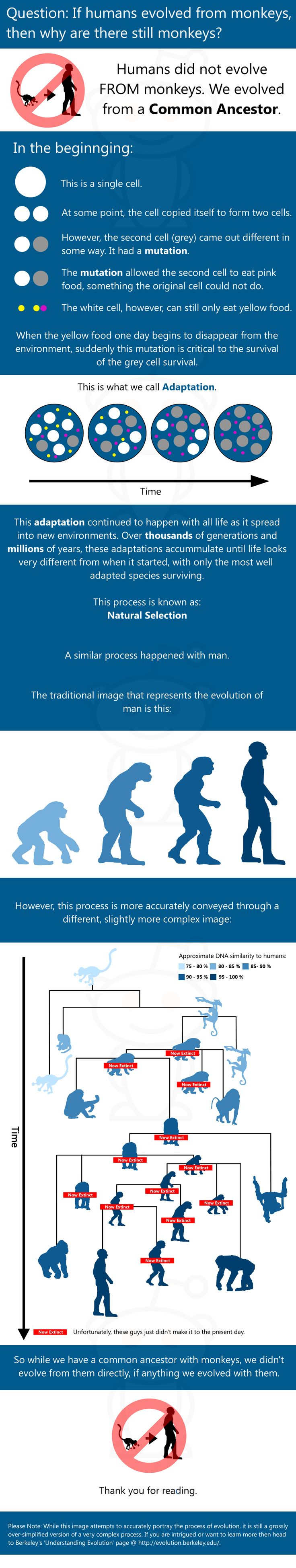 Question: If humans evolved from monkeys, then why are there still monkeys?