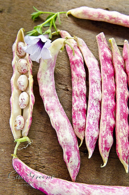 "Cranberry Beans, also known as borlotti in Italian and ""shell beans"" in some regions. These beans have a mild flavor that is somewhat comparable to nuts, particularly chestnuts. It is used in Italian, Portuguese, Turkish, and Greek cuisine."