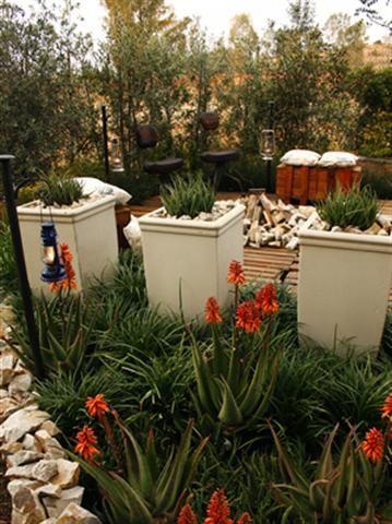Garden and Home | Bushveld inspired garden
