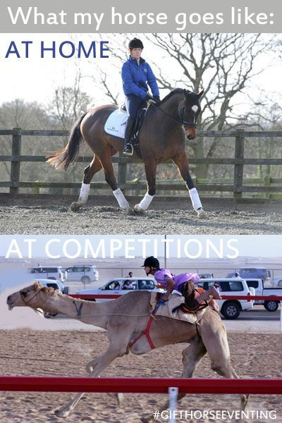 Surely everyone has experienced racing camels at some point in their lives, am i right? ;)