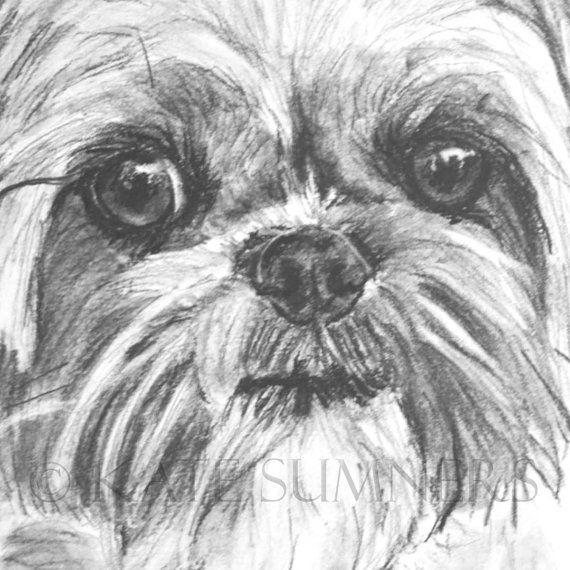 Shih Tzu Art Print of Drawing 8x10 Dog Art by ESArt on Etsy