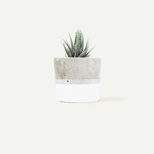 Zebra haworthia in our 'Little One' concrete planter. @leafygoods