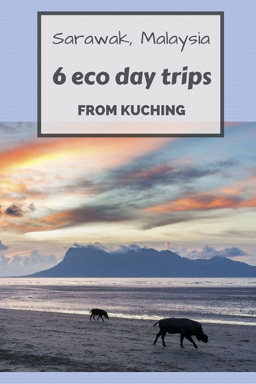 6 eco day trips from Kuching: orangutans, proboscis monkeys, rainforests and an eco-friendly place to stay in the capital of Sarawak, Malaysia!