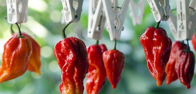 Svi znaju da su paprike ljute, ali jeste li znali da paprike imaju svoju vlastitu skalu ljutine?
