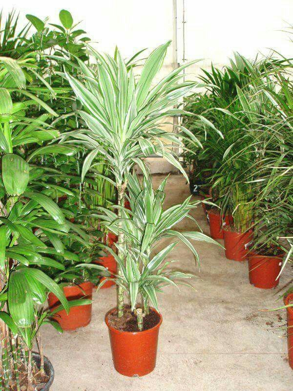 THE MOST POPULAR INDOOR PLANTS by HOYA, s.r.o.