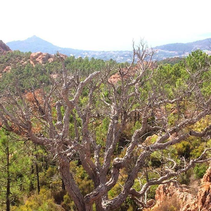 En automne il fait moins chaud pour aller randonner #nature #arbre #balade #esterel #marche #automne #var #agay #provence #tree #hike #automn #baum #albero #fallen #autunno http://ift.tt/2wb0DeZ