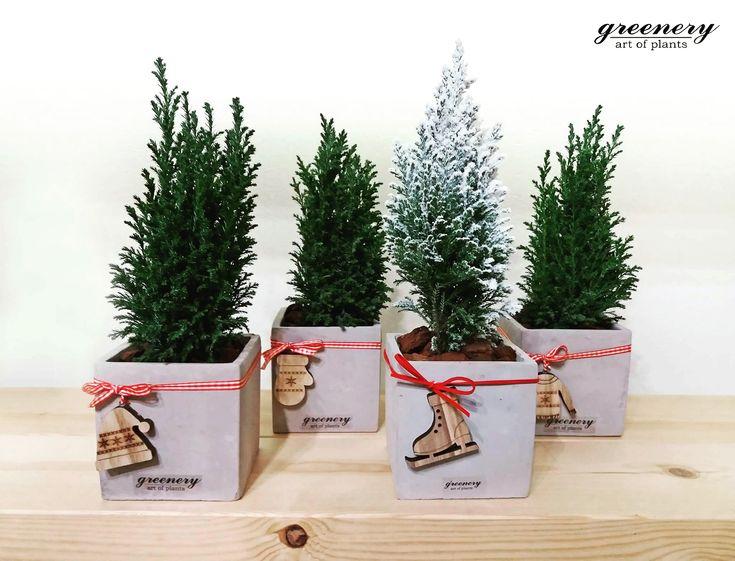 Have a holly jolly Christmas! #greenery #xmas #christmas #gifts