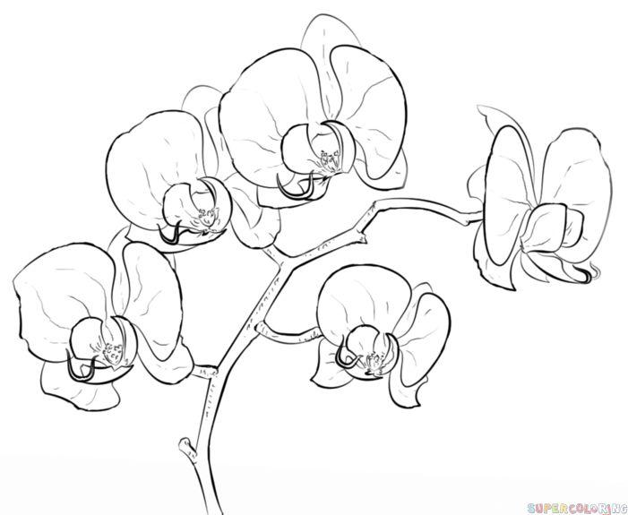 comment dessiner une orchid e tape par tape tutoriels de dessin coloring pictures. Black Bedroom Furniture Sets. Home Design Ideas