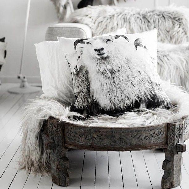 Adore The Sheep Pillow