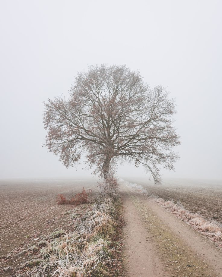 Majestic tree - I've always wanted to take a picture of this tree, but the background on a regular day is way too cluttered for it. So a nice foggy day gave me the perfect moment to go capture it :-)
