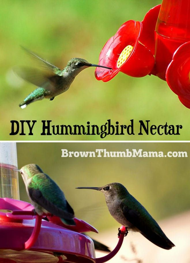Hummingbird Food Recipe Hummingbird Nectar Hummingbird Food