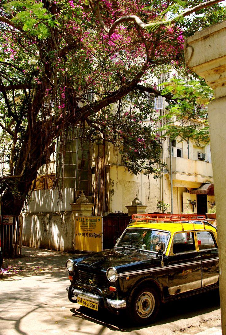 Mystérieuse Inde / India   Photo prise par Thibaut Mallecourt