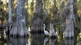 Ο Εθνικός Δρυμός Everglades φιλοξενεί ζώα που απειλούνται με εξαφάνιση, όπως τον πάνθηρα της Φλόριντα