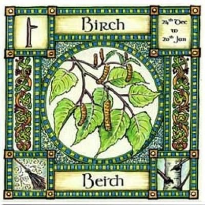 """✯ The Wisdom of Tree -:¦:- Birch, Ogham name Beith, rules 24th Dec to 20th Jan, in divination it represents a new start, beginnings and birth. Use Birch twigs for broom making """"a new broom sweeps clean"""" .:☆:. Shop: The Goddess & The Green Man ✯"""