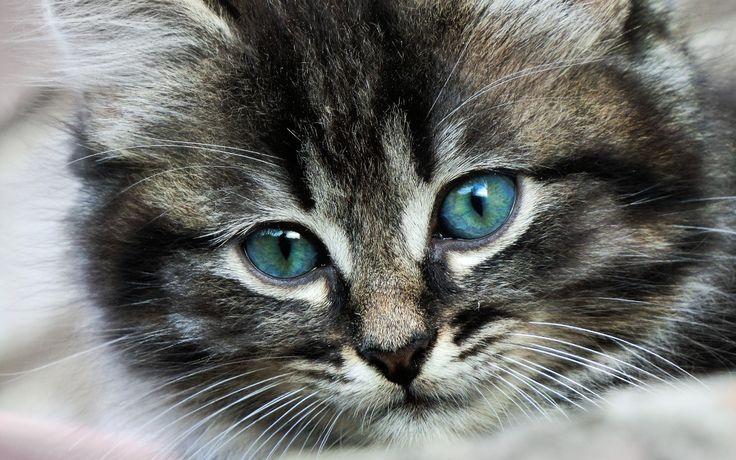 Fond d'écran hd : chaton