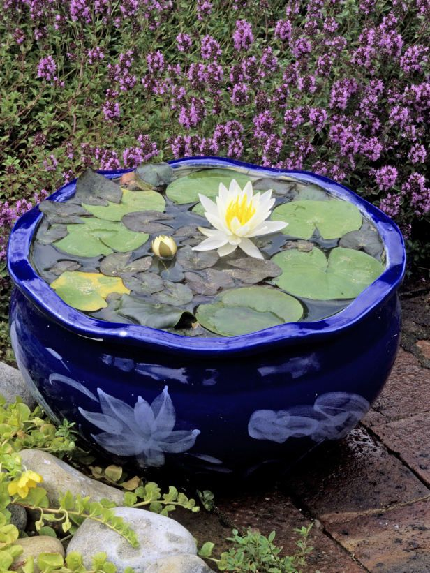 62 best E Container for Water lily images on Pinterest Garden