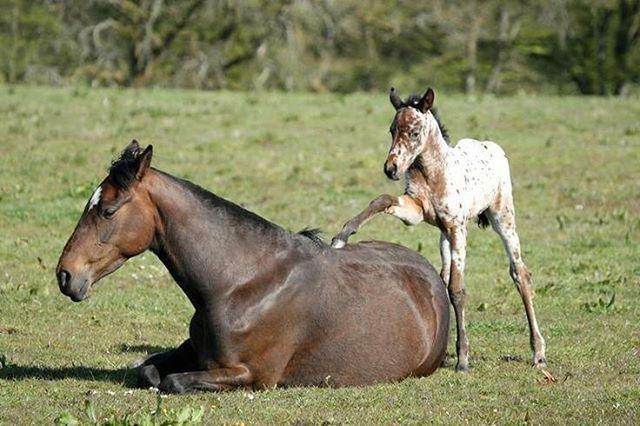 #horsesplanet
