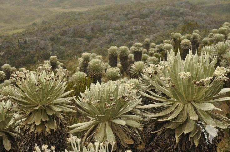 Tatacoa, Cocora, Tayrona, paramo sont quelques exemples de l'incroyable diversité des paysages de Colombie, de la mer aux montagnes enneigées des Andes