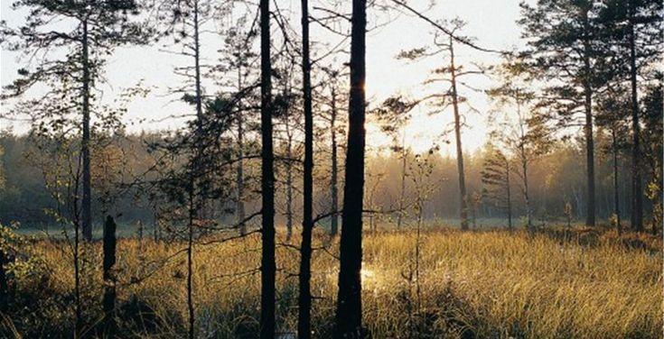 Norra Kvill Nationalpark Nationalparken ligger ca 15 km nord om Spilhammarscamping, mot vägen  Rumskulla /  Ydrefors.  http://www.vimmerbyturistbyra.se/norra-kvill-nationalpark/