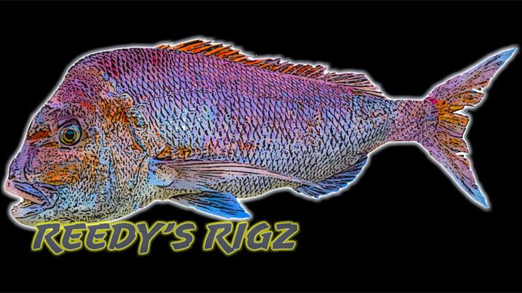 Reedys Rigz Pack 10 Fishing Rigs Save On Tackle Rig | eBay