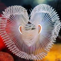 ˚Love under the sea
