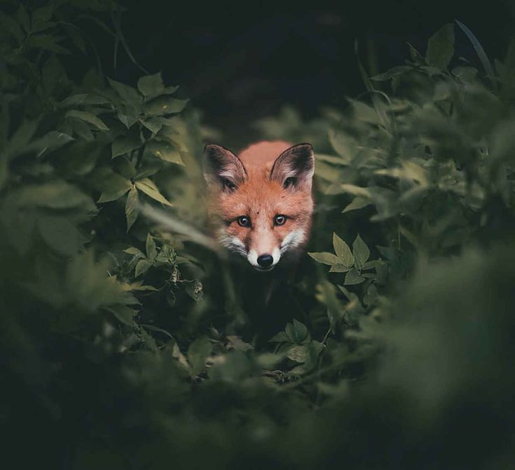Photographer Captures Majestic Forest Wildlife in Intimate Photographs