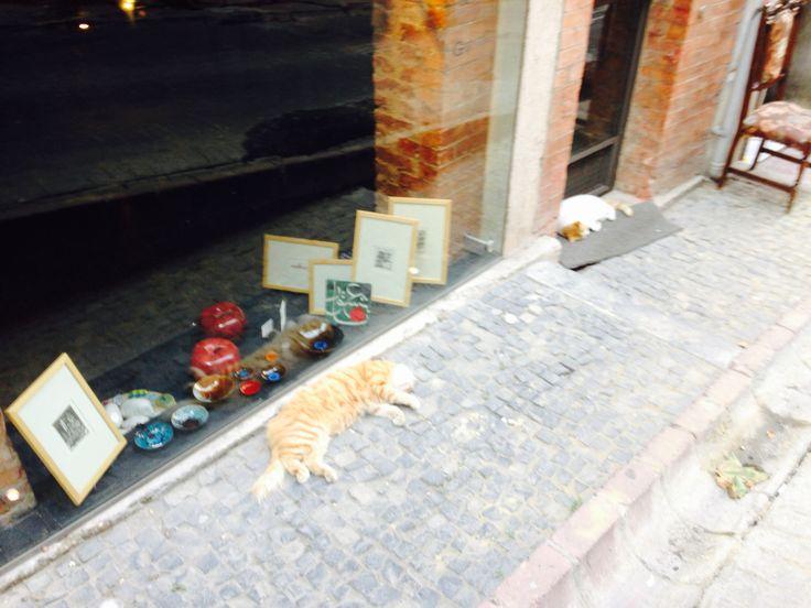 Turkish cats