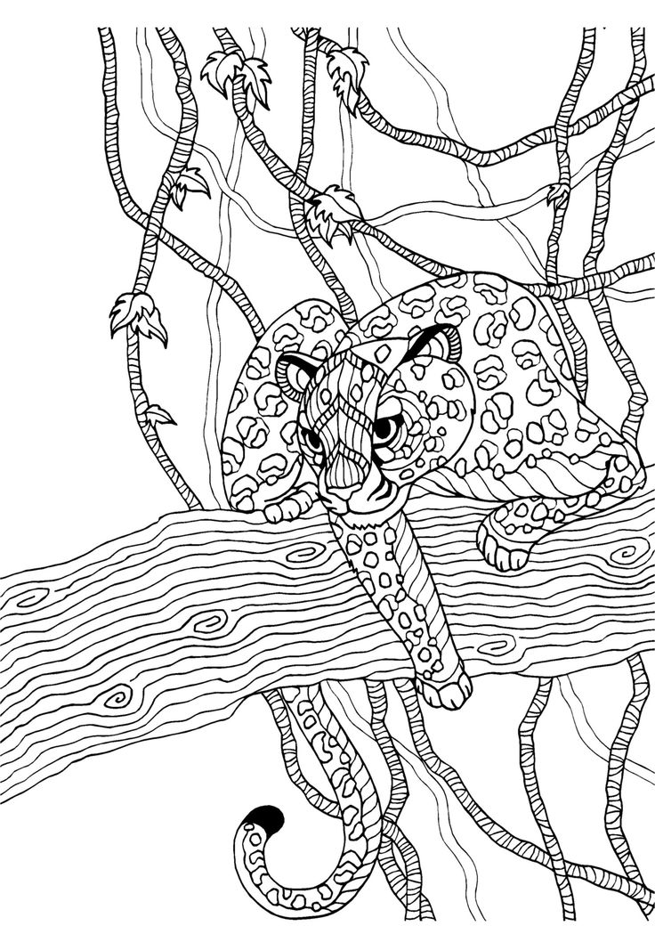 cheetah adult colouring page colouring in sheets art craft art supplies i