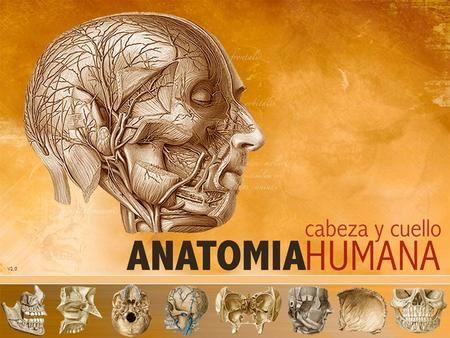 V2.0. UNIDAD 1: OSTEOLOGIA HUESOS DE LA CARA Situación: Parte Inferior y anterior de la cabeza Mandíbula Inferior (1): Maxilar Inferior Mandíbula Superior.