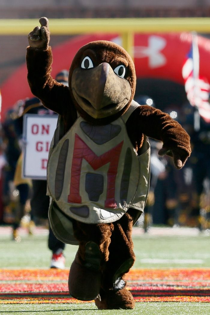 Mascot Monday: University of Maryland Terrapins | Surviving College | Game Day! | Pinterest ...