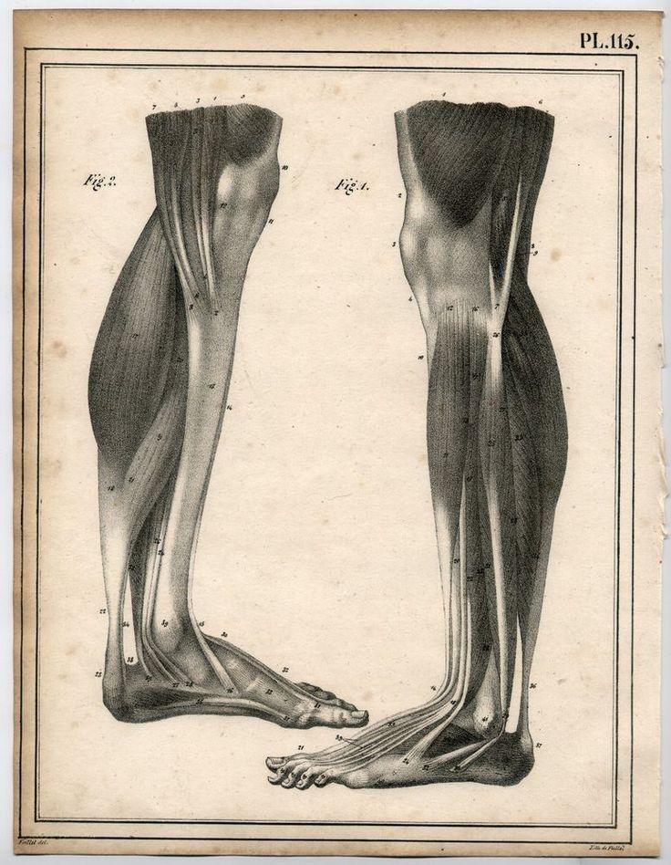Cloquet 1825 Antique Lithograph: Foot Leg Anatomy Medicine Bone Macabre Muscle