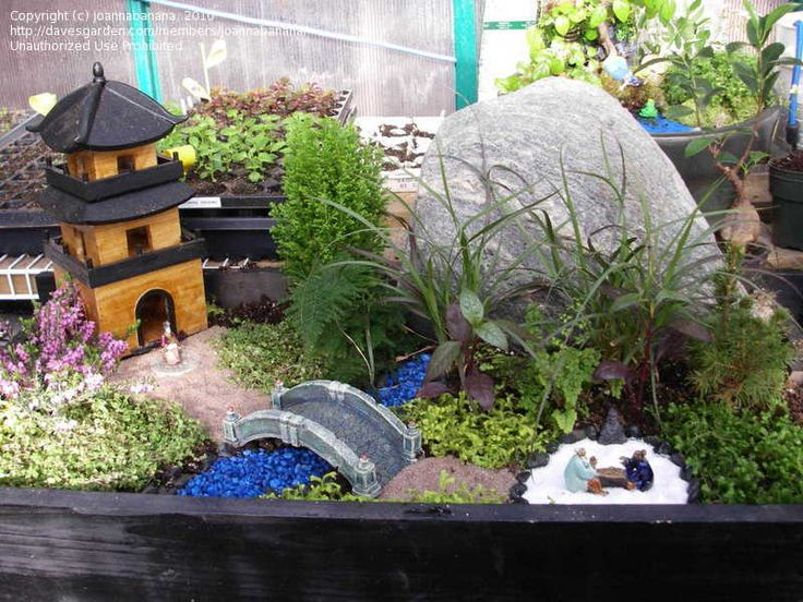 Top Design Specialty Gardening: Miniature Japanese Garden, 1 By