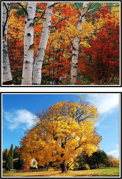 Samtalsbilder hösten -beställning