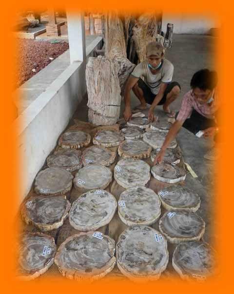 IndoGemstone Petrified Wood Slab