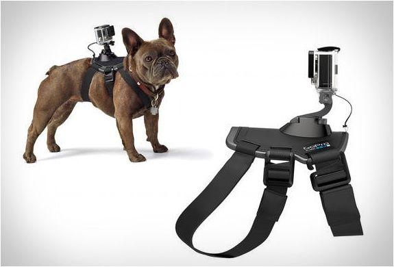 GoPro Fetch - Honden Harnas  Description: Bevestig uw GoPro op uw hond om aan de wereld beelden te tonen vanuit zijn oogpunt. Dit harnas is voorzien van twee montage locaties voor verschillende perspectieven: de borst voor bot kauwen graven en voorpoot actie en de achterkant voor over-the-head shots van rennen springen stokhalen en nog veel meer. de Fetch is gemaakt van afwasbaar enwater vriendelijk materiaal uw hond kan er gemakkelijk meezwemmen spelen en vies worden zonder zorgen. Zachte…