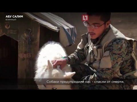 ✔Спасение животных. Сирийский солдат спасает животных на войне