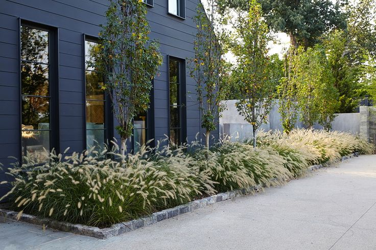 Grasses in a side garden with tree landscaping against a black wall.