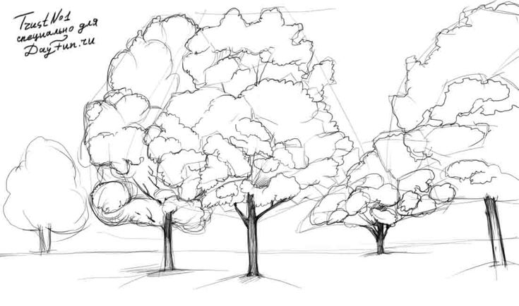 how to draw a tree step by step realistic