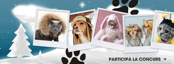 <3 Synevovet <3 concurs foto, cel mai amuzant animal de companie