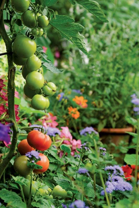 Flowers and Vegetables for Your Cutting Garden - Old-House Online