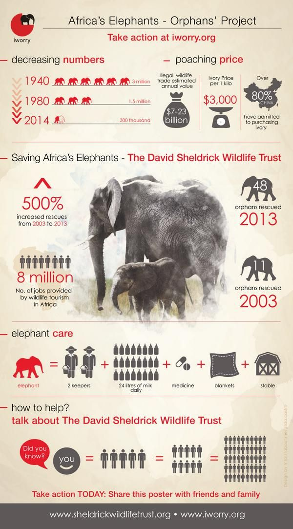 Africa's #elephants in Numbers' crucial info-graphic on #ivory trade. Please say 'NO' to ivory.