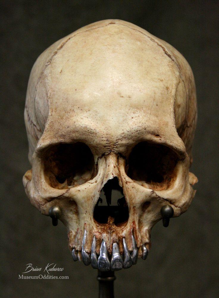 25+ best human skull ideas on pinterest | skull reference, human, Human Body