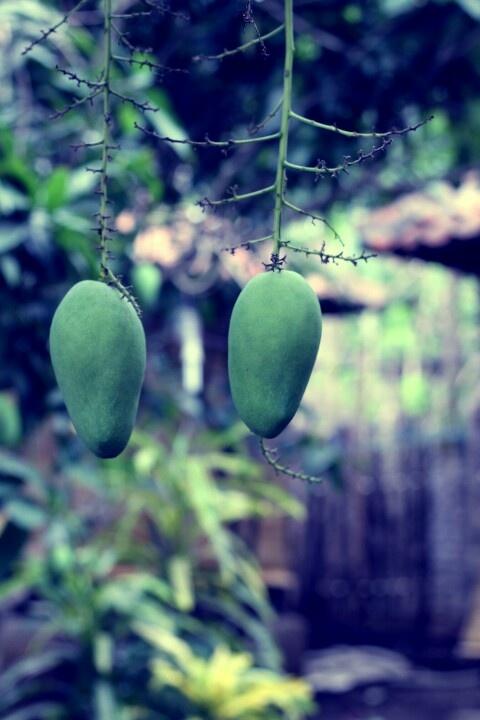 Twin mango