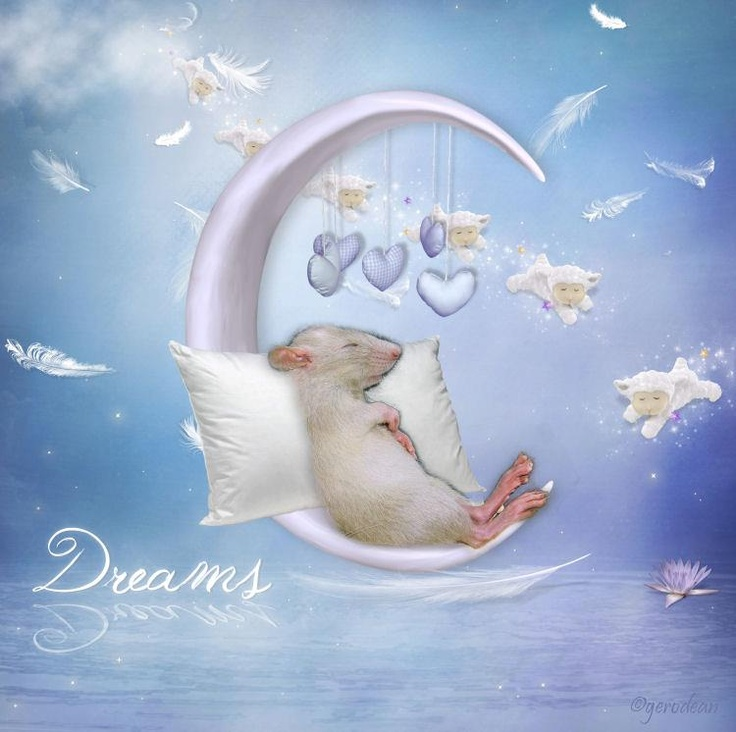 ..........Rataku Mischief, Aquarel Dessin, Aquarelle Dessin, Animal Fantasy, Monde Enchanté, Furries Families, Dessin Animaux, Mouse Clips, Clips Art