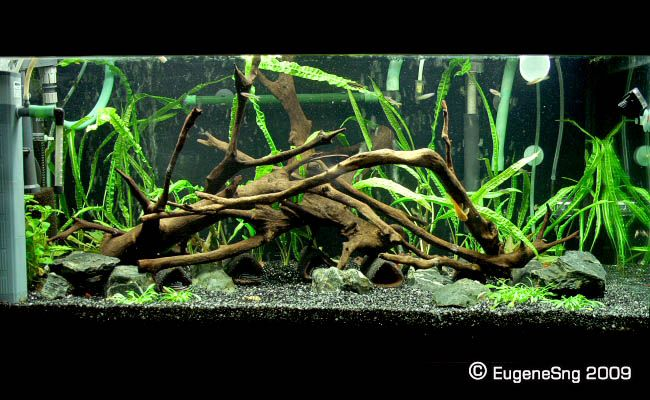 pleco tank setup | Thread: genes's pleco tank | Pet cage ...