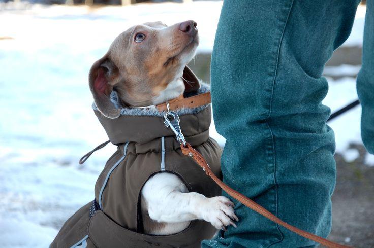 Brrr....ik heb het zo koud! Foto: Marco in 't Veldt