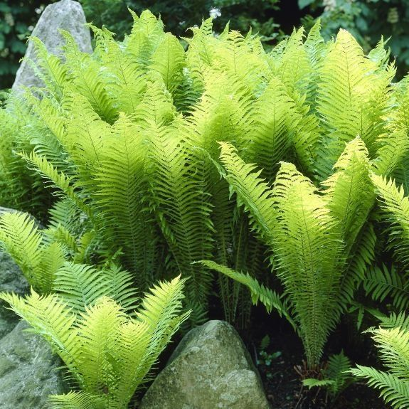 17 Best Images About Garden On Pinterest Delphiniums