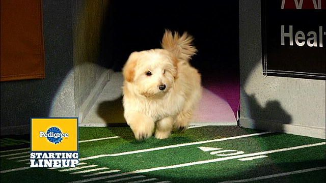 Top 10 Puppy Bowl Moments: Puppy Bowl. Watch the Top 10 videos from Animal Planet's Puppy Bowl, with an all-star, all-adorable cast that's ready to mix it up on the Animal Planet Stadium.