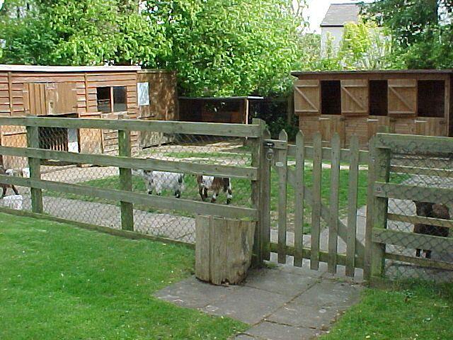 Cute little goat yard.