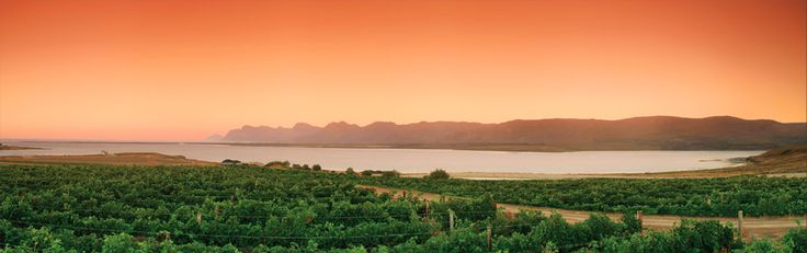 Come visit us for wine tasting and make this your view!